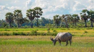 Siem Reap: Beyond Angkor