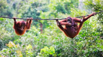 Incredible Itinerary – Magical Borneo